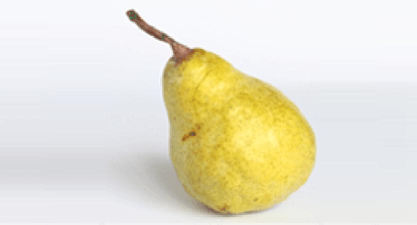 """Birne """"Gellerts Butterbirne"""""""