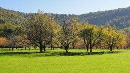 Baumpatenschaft kaufen – Das spricht für Klimawiese