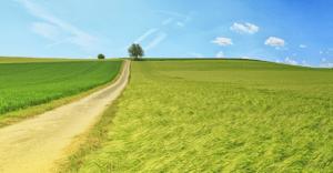 Umweltprojekt Klimawiese