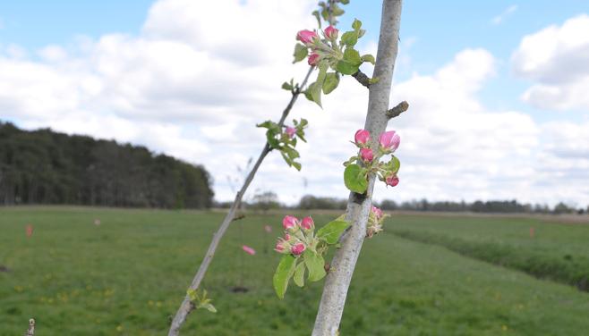 3 qm Blühpatenschaft auf Lebenszeit