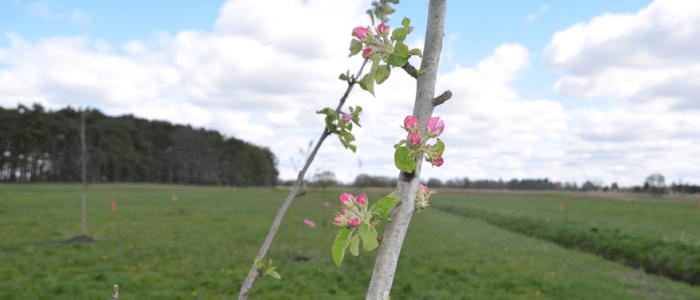 5 qm Blühpatenschaft auf Lebenszeit