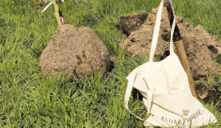 Liebenwalder Naturgarten –Erste Pflanzung