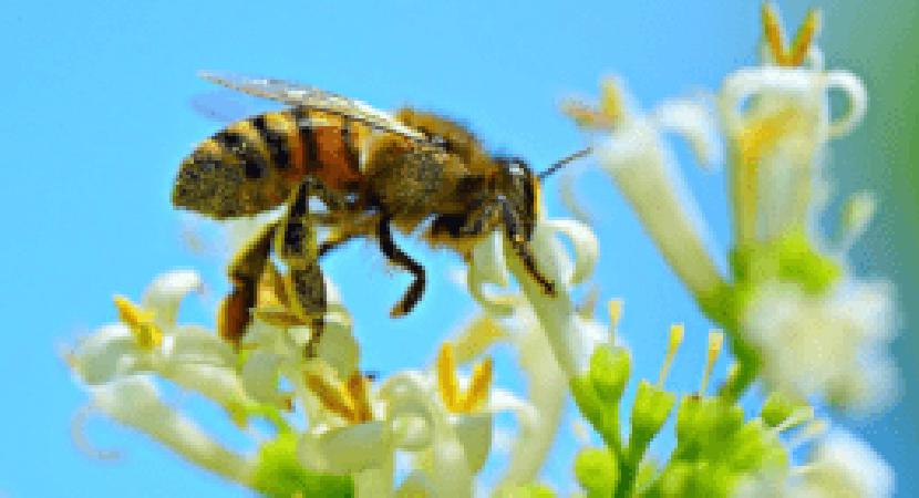 Heute ist Weltbienentag – wir bieten Dir sieben Tipps, wie auch Du zum Bienen helfen kannst