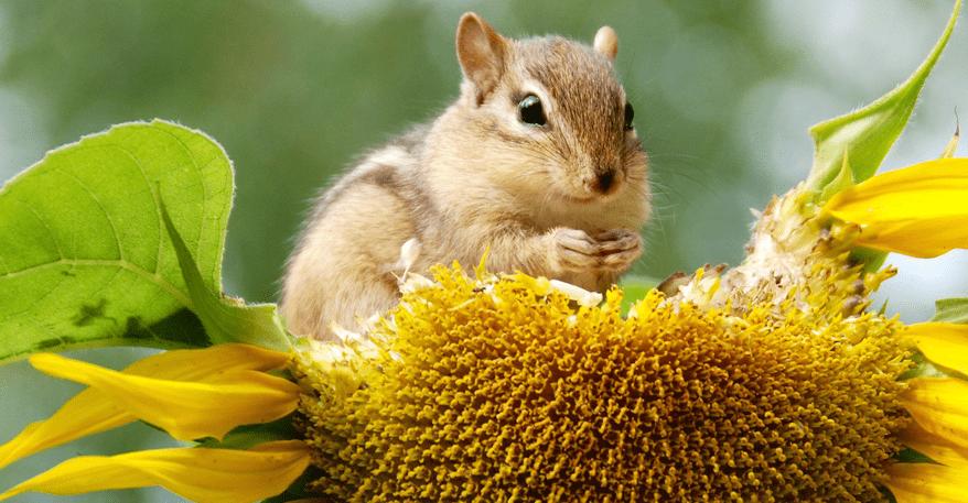 Artenvielfalt Klimawiese