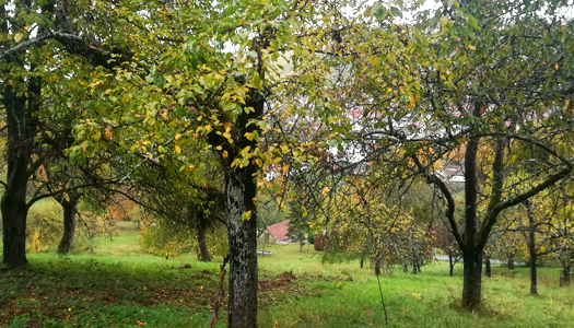 Streuobstwiese Weinstadt