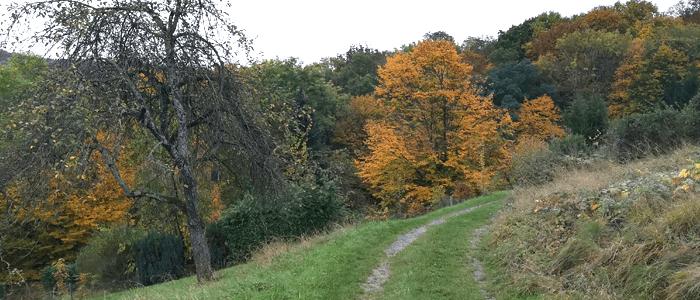Obstbaum-Patenschaft auf Lebenszeit in Weinstadt