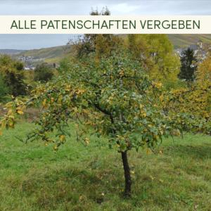 Bäume Weinstadt ausverkauft