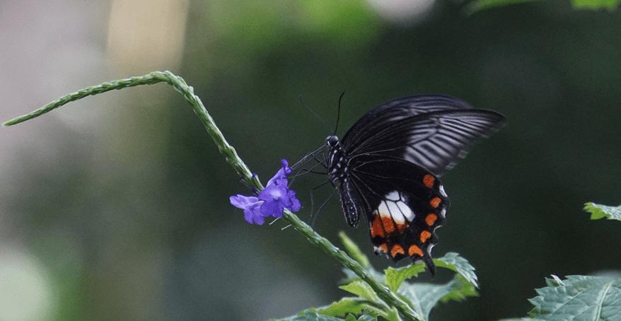Artenvielfalt erhalten
