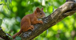 Setz Dich als Blühpate für Eichhörnchen ein
